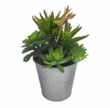 ASSORTED SUCCULENTS IN A ROUND TIN POT, 4 X 10 IN