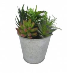 ASSORTED SUCCULENTS IN A ROUND TIN POT, 4 X 9 IN