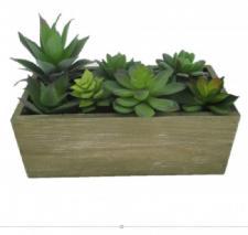 ASSORTED SUCCULENTS IN A WOODEN BOX, 10 X 4-3/4 X 7 IN